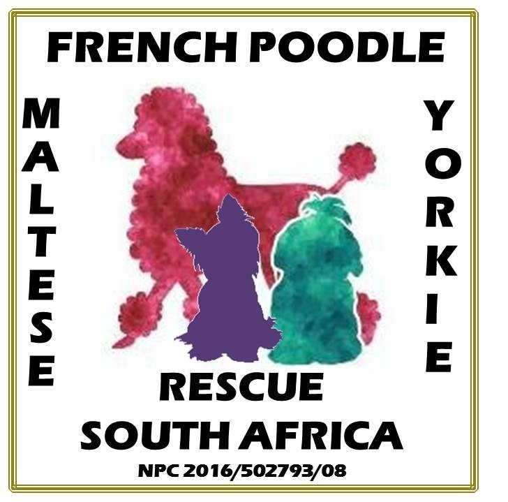 Maltese, French Poodle & Yorkie Rescue South Africa